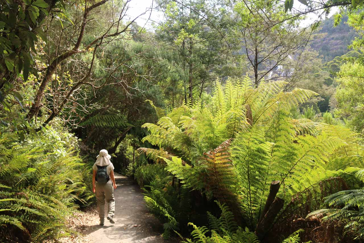 Abundant ferns flanking the trail indicated to us that we were indeed in a rainforest