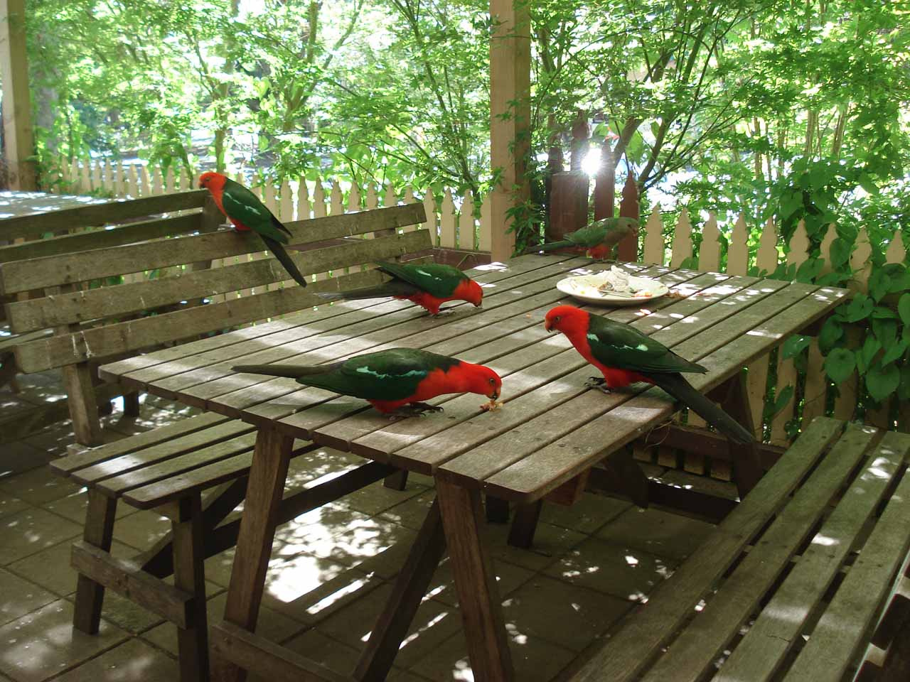 A bunch of red-headed birds pecking away at scraps at a picnic table
