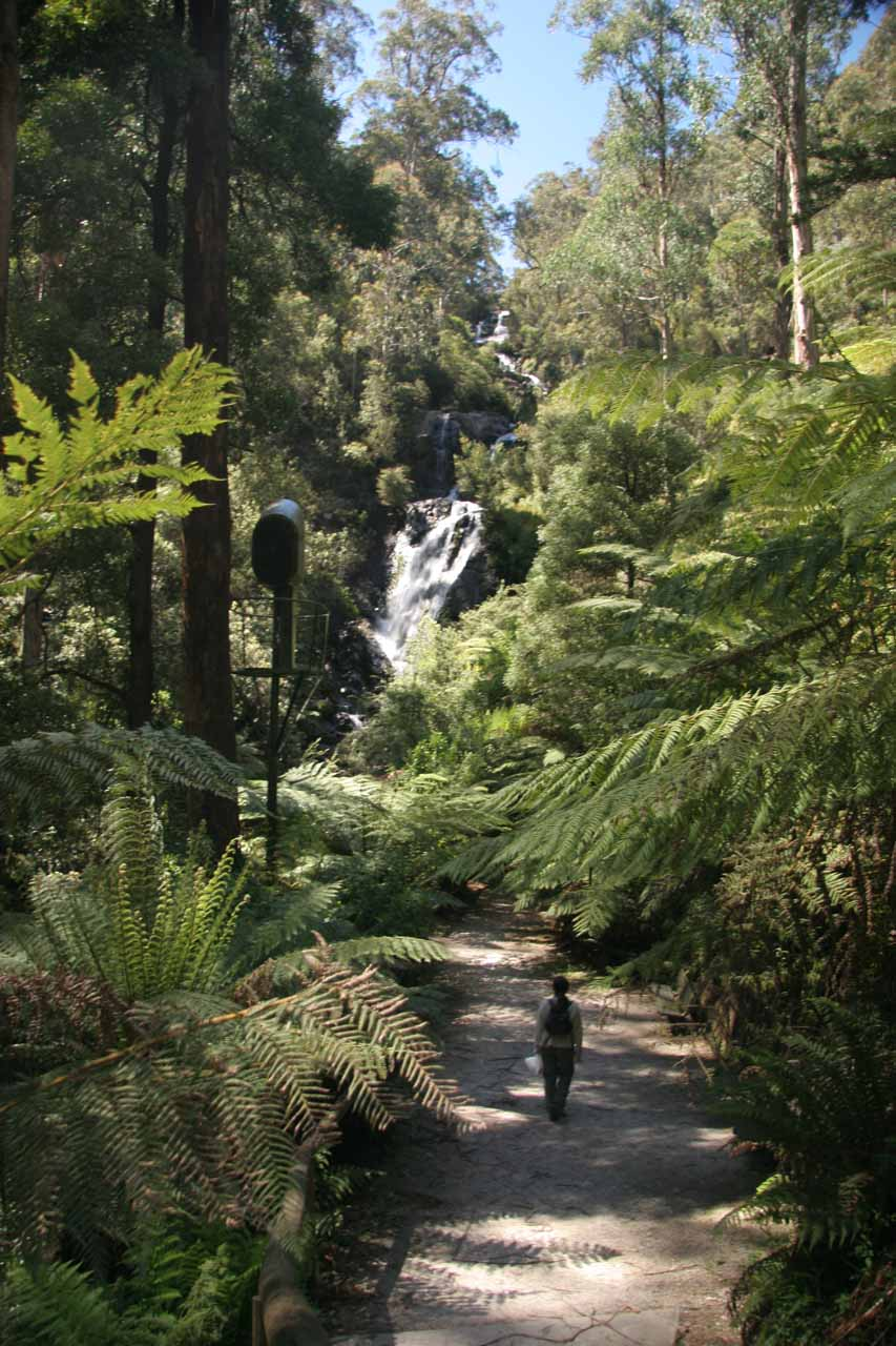 Julie approaching Steavenson Falls on the main track.  Notice the floodlight adjacent to the track