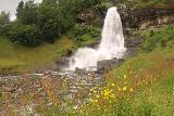Steindalsfossen_085_06262019 - Wildflowers blooming before the Steinsdalsfossen during our late June 2019 visit as they're clearly thriving in the waterfall's spray