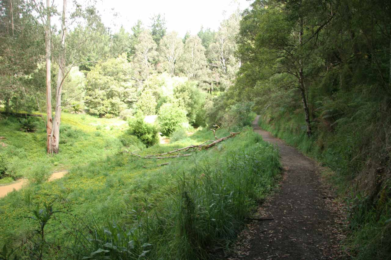 The alternate track started off in a somewhat open area alongside part of the Gellibrand River