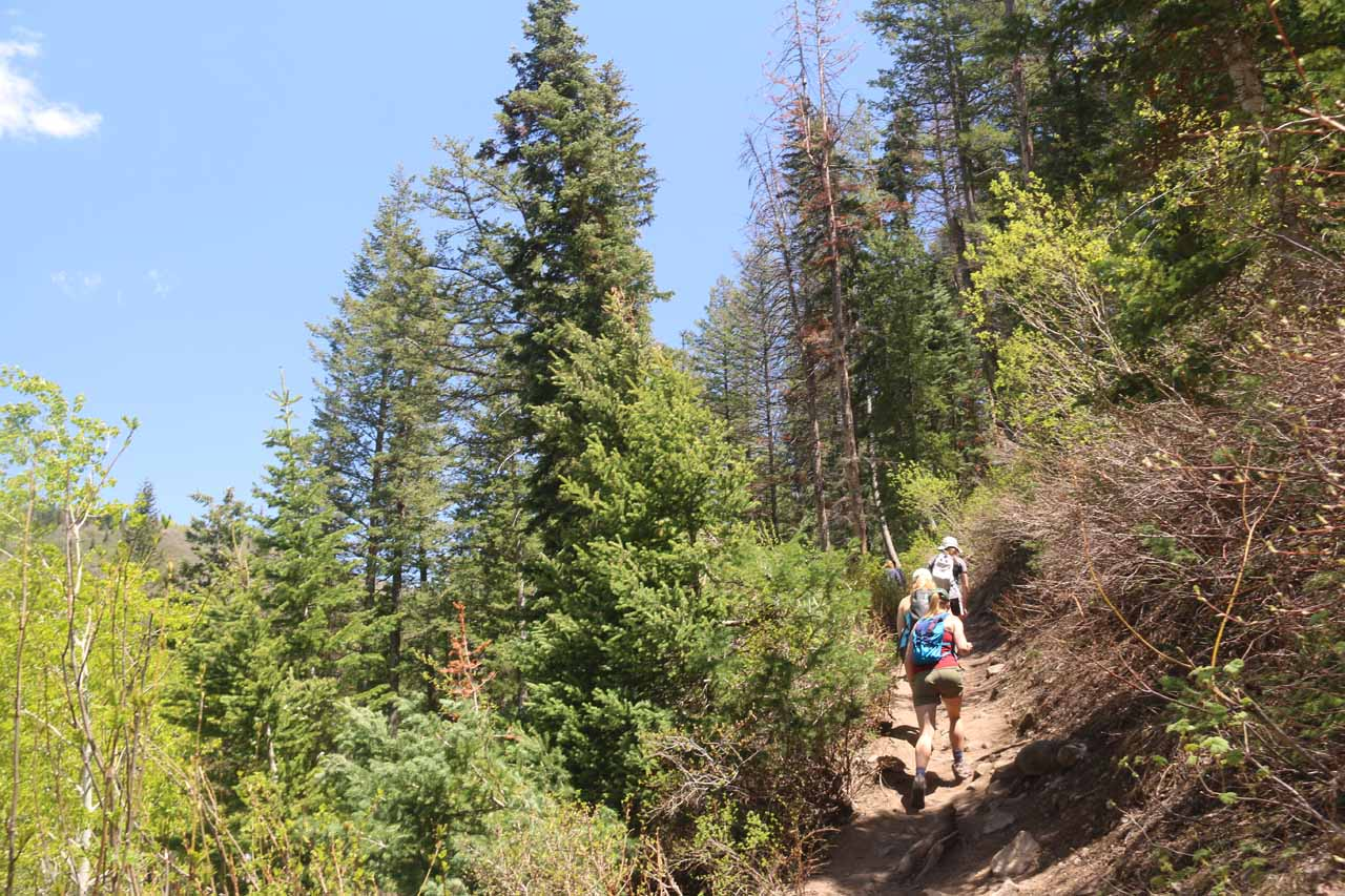 Then, the Stewart Falls Trail made a sharp bend to the left and started climbing in earnest