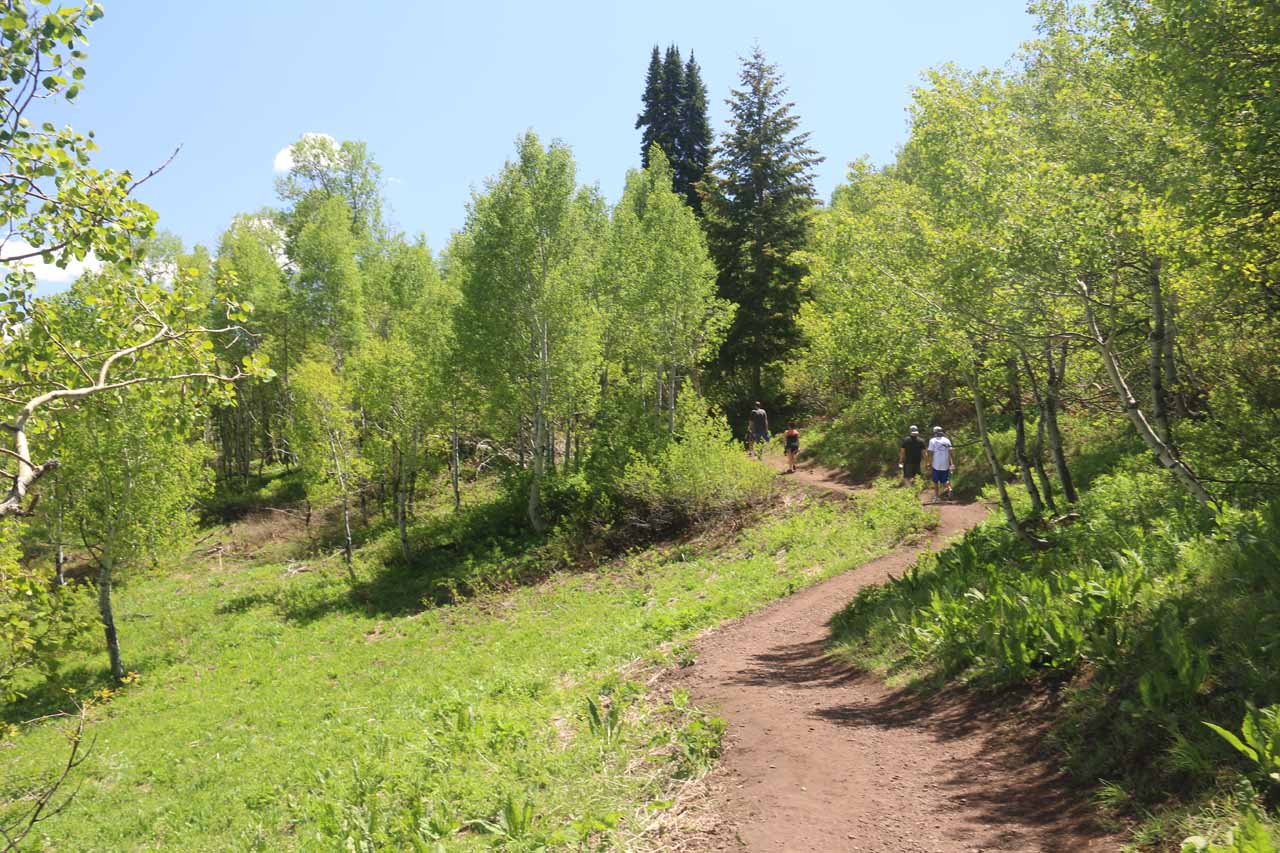 The Stewart Falls Trail then meandered past this little clearing or meadow