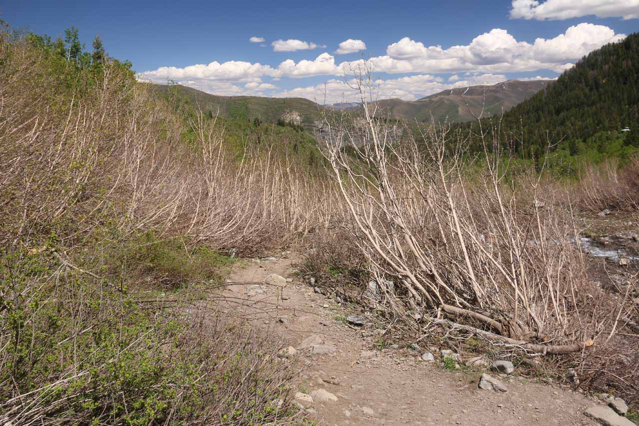 This was the trail leading down to the Sundance Resort, which was the other way of hiking to the falls that I'd imagine was less up-and-down than the Aspen Grove route