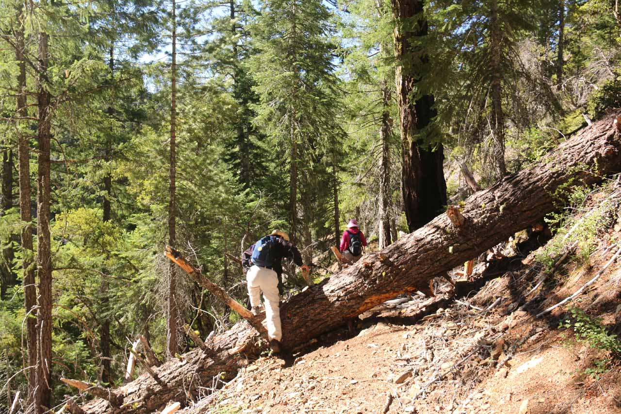 Mom and Dad getting over this fallen tree obstacle during the initial descent down to the Middle Fork Stony Creek