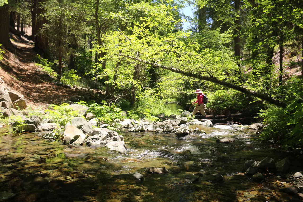Mom finding a different way to cross the Middle Fork Stony Creek without getting her feet wet
