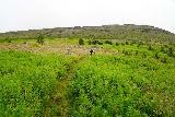 Strutsfoss_040_08112021 - Context of Mom going through some low-lying shrubs as we made our way into Villingadalur Valley on the way to Strútsfoss