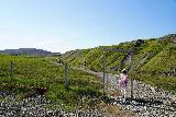 Studlagil_Canyon_110_08102021 - Tahia going through a gate on the Stuðlagil Canyon Trail through Klaustursel Farm