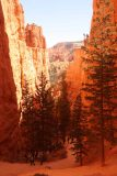 Sunset_Sunrise_Loop_064_04032018 - Descending into the scenic Wall Street Section of the Navajo Loop Trail, where some trees have managed to grow from within its depths
