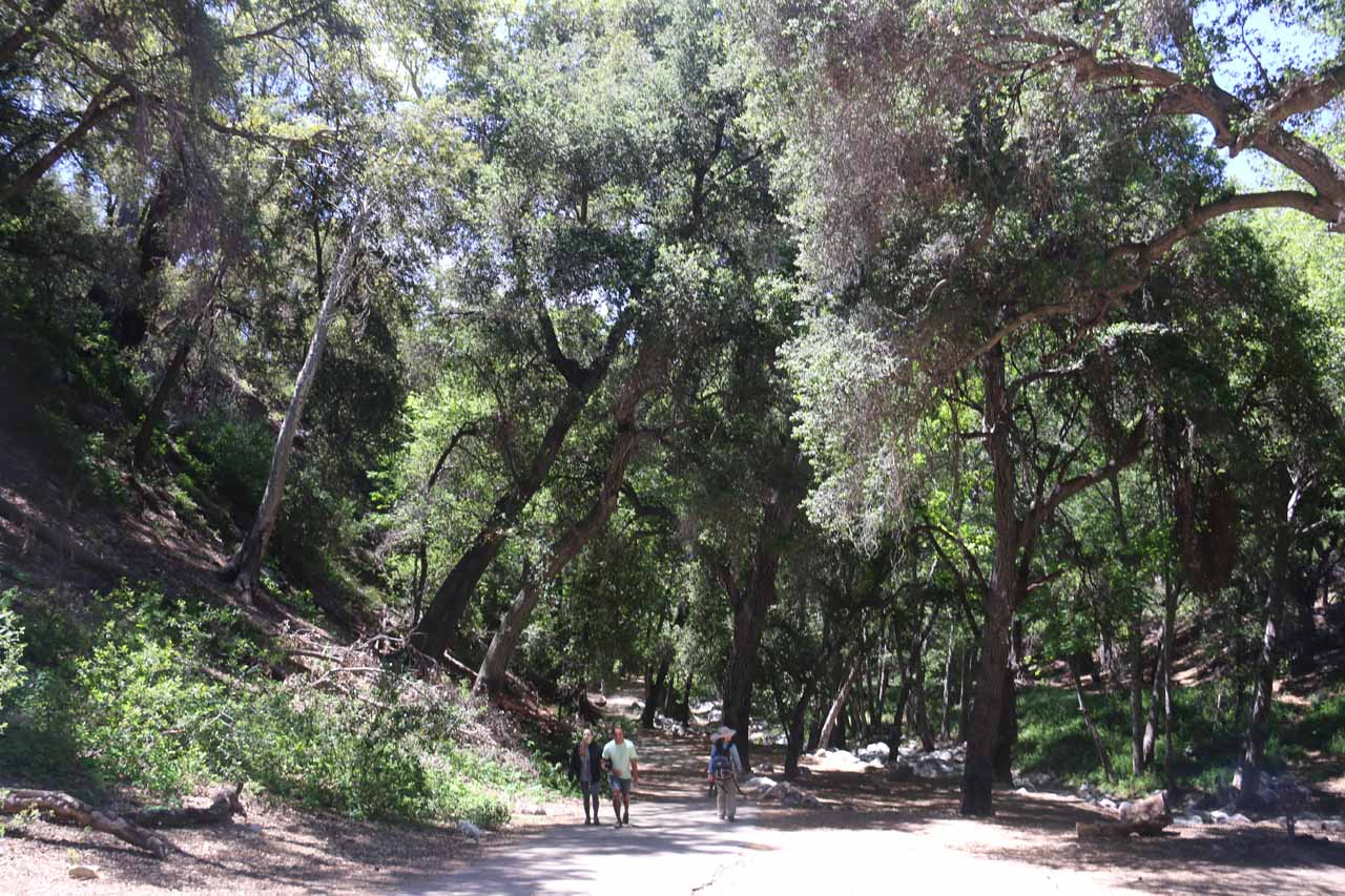The serene trail alongside Arroyo Seco (Dry Creek in Spanish) and picnic area on the way to Switzer Falls