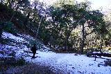 Switzer_Falls_024_12282019 - The mostly flat and gently downhill trail traversing some patches of snow en route to Switzer Falls