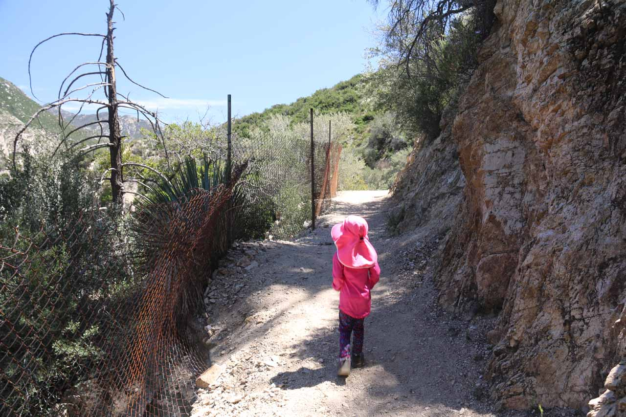 Some sections of the trail had chain-linked fences to prevent the temptation to scramble down the nearly vertical cliffs for a better look at the main drop of Switzer Falls