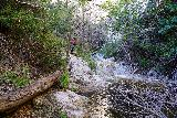 Switzer_Falls_075_12282019 - Tricky terrain in order to avoid wading through Arroyo Seco en route to the main Switzer Falls