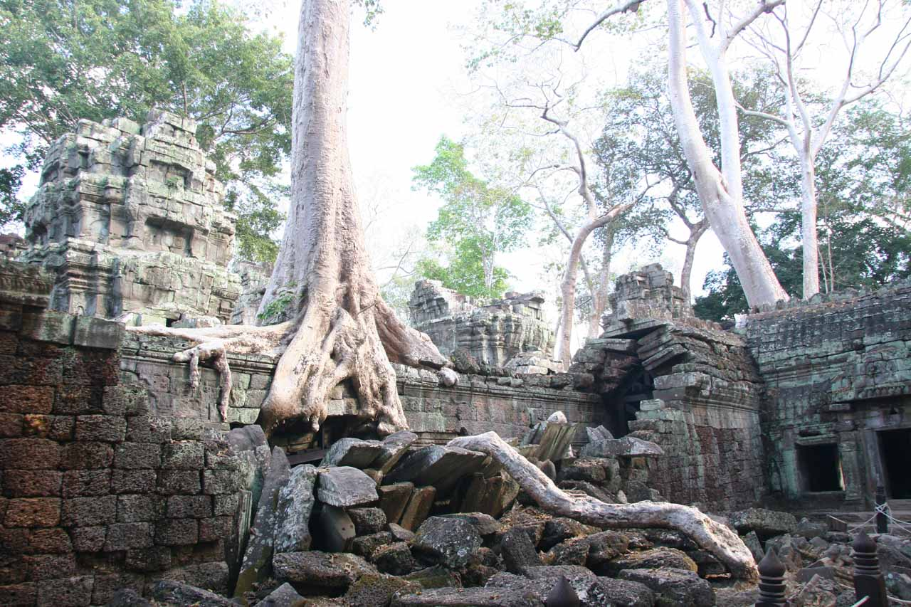 Trees growing out of the ruins of Ta Prohm