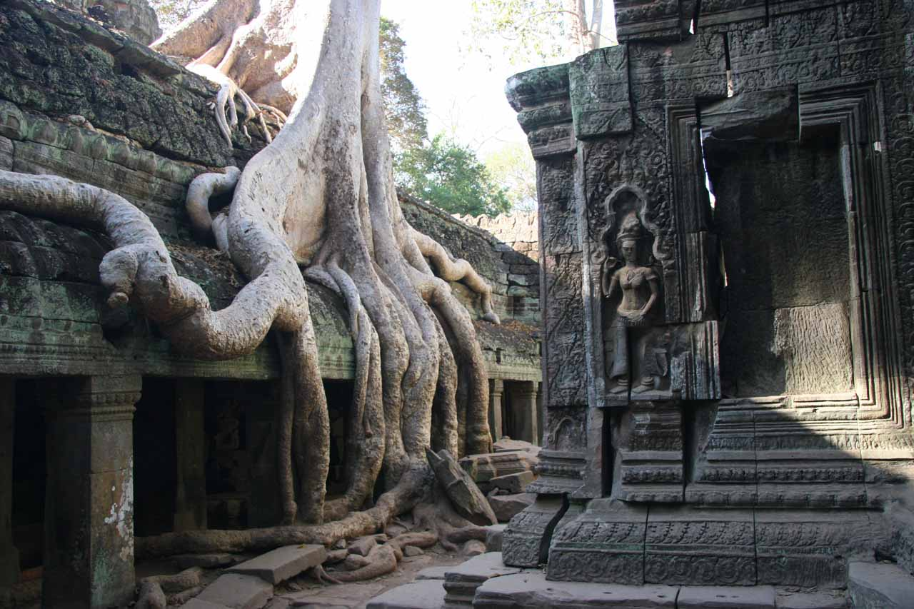 More trees and ruins of Ta Prohm
