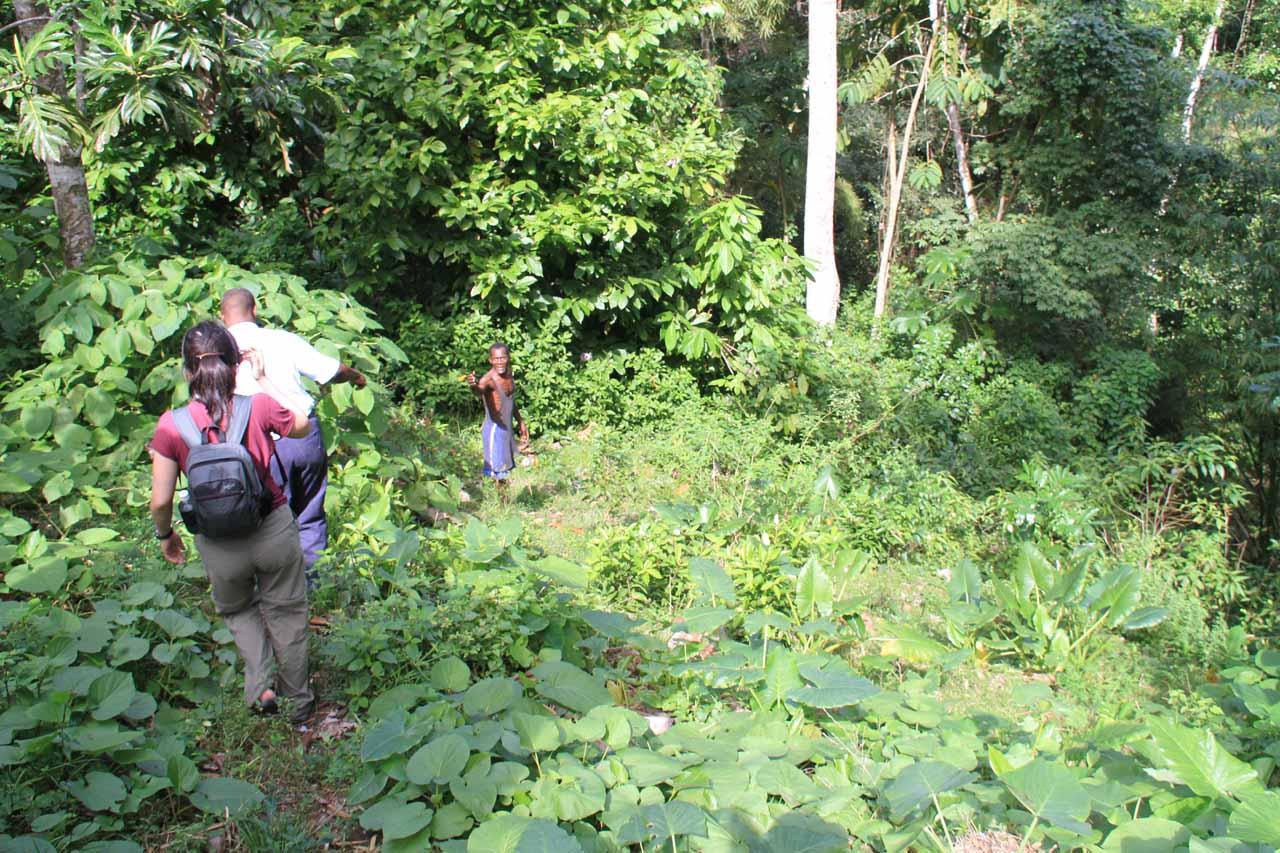 Descending towards the rough path to Tacky Falls
