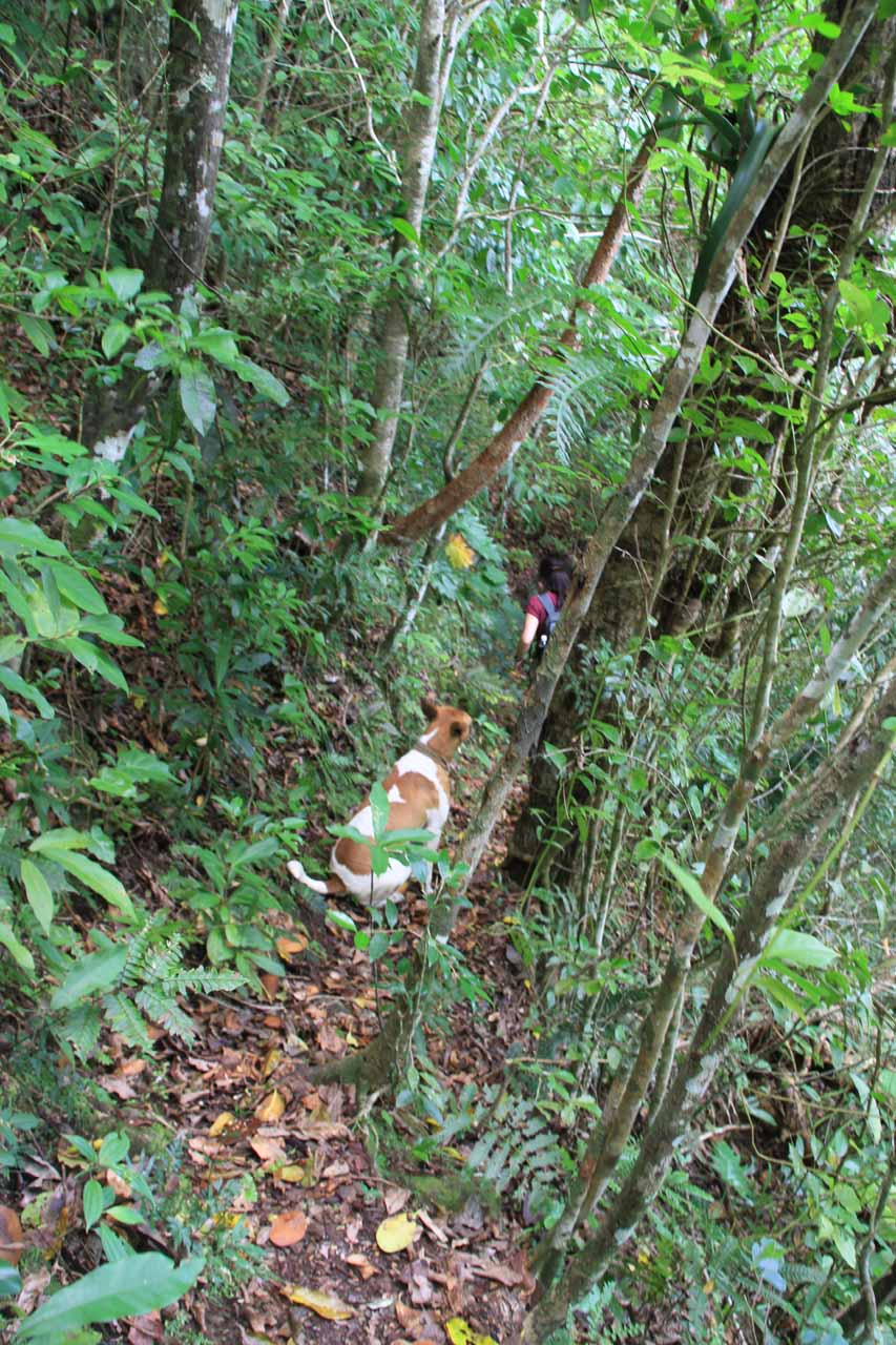 On a very narrow and exposed part of the path while being followed by the local dog