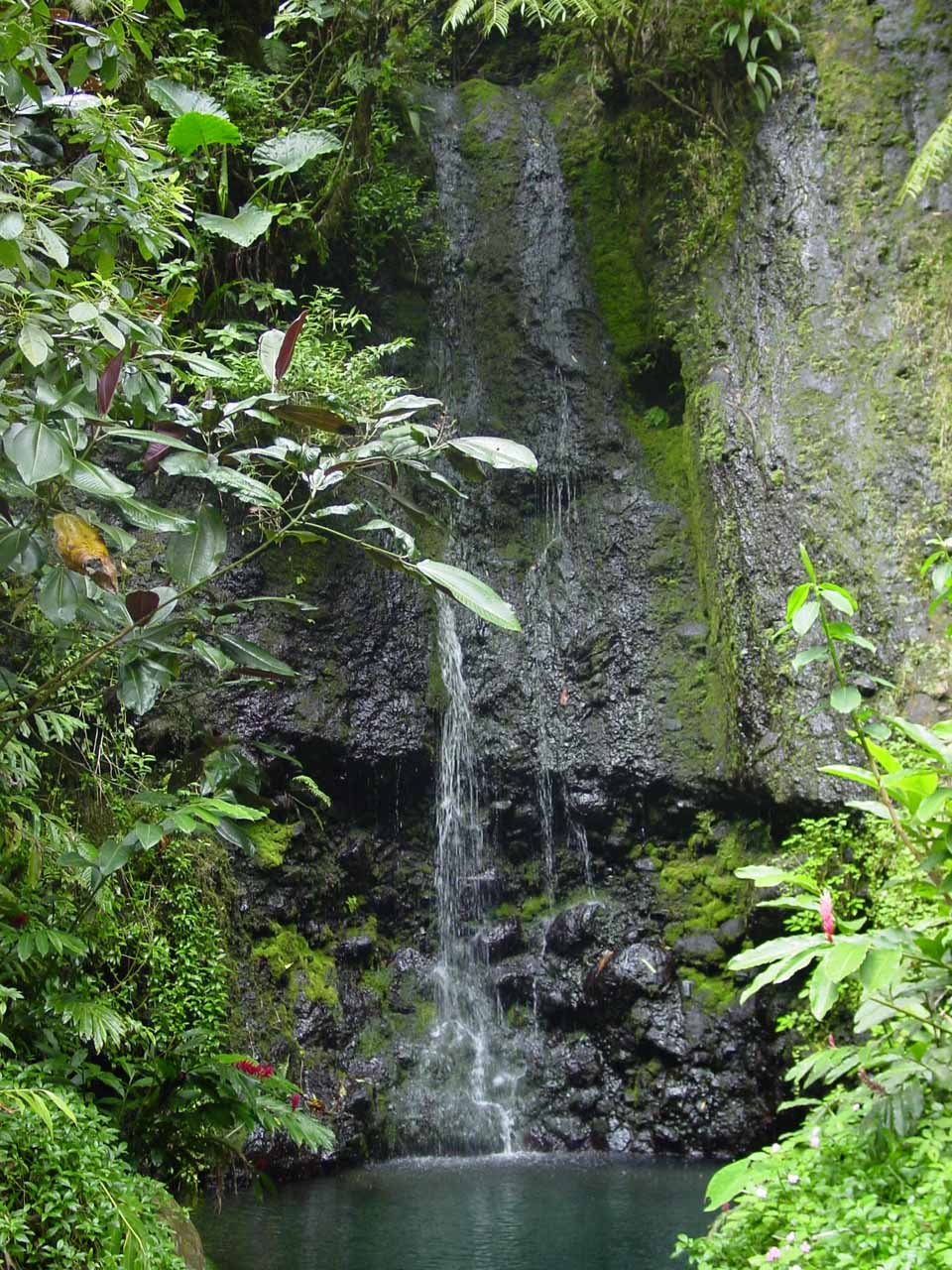 A pretty waterfall on the Vaihiria River Valley side