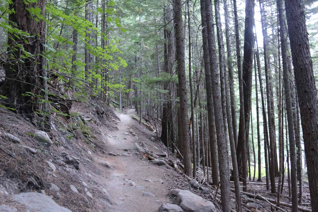 Not long after the sturdy bridge, the trail started to ascend above the forest floor