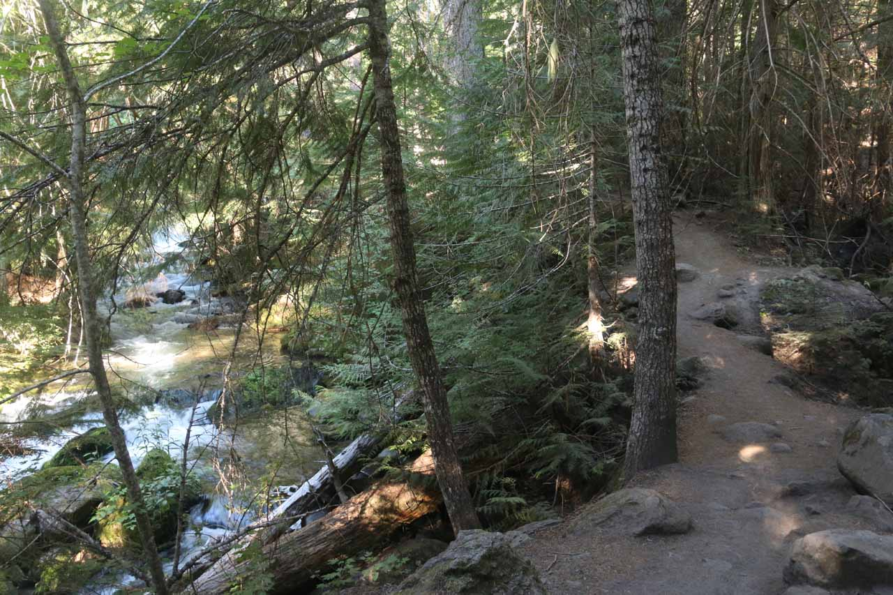 The Tamanawas Falls Trail continuing alongside Cold Springs Creek and some intermediate cascades