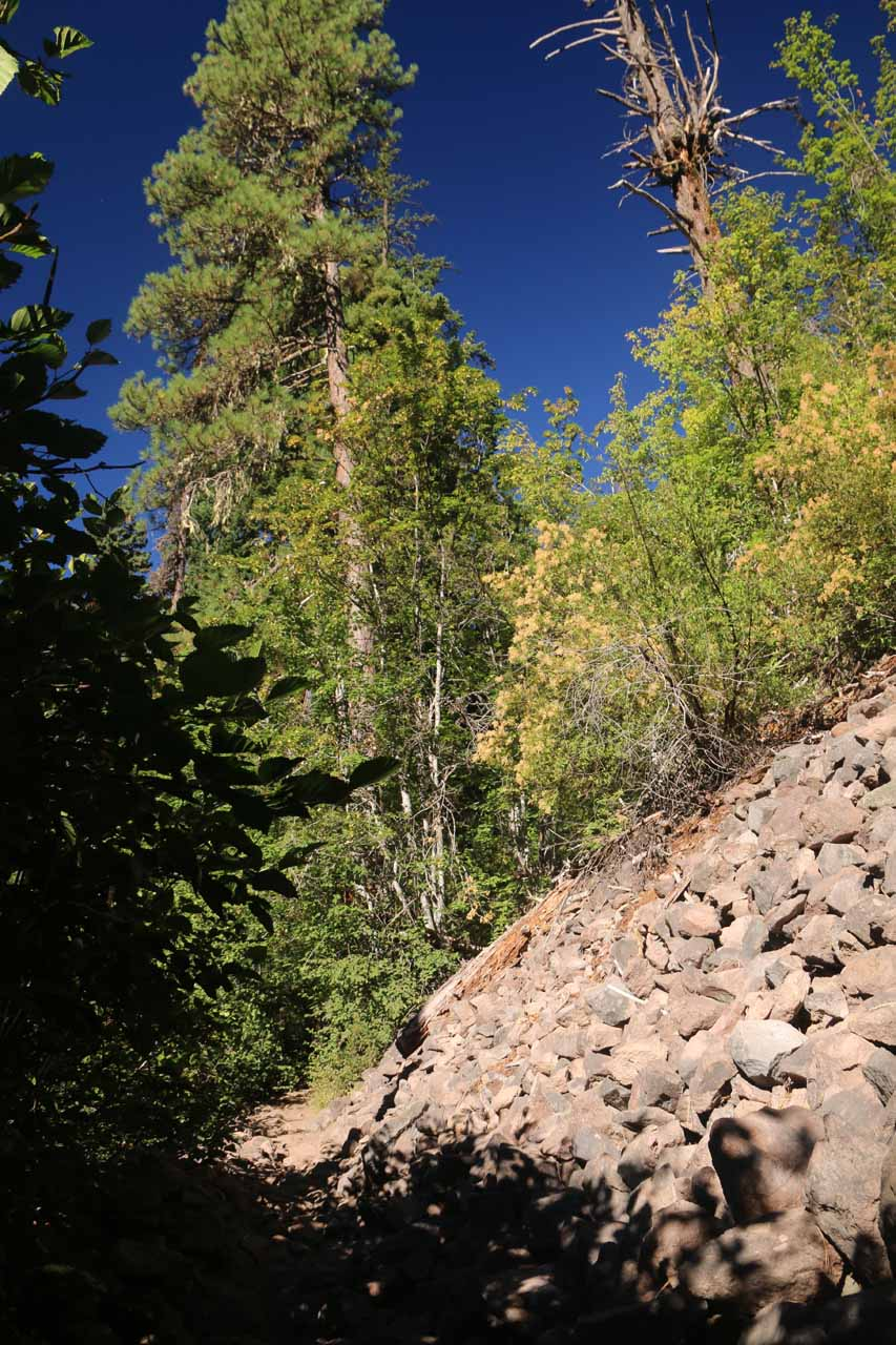 This was one of the rock slopes next to the Tamanawas Falls Trail, but it wasn't the major rock slide that destroyed part of the original trail