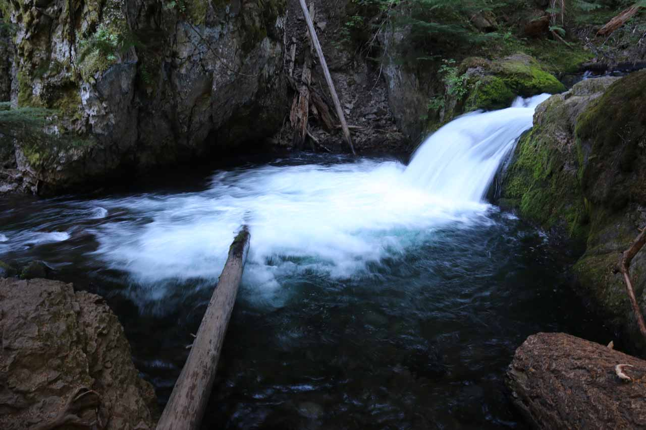 This tiny waterfall and dark pool on Cold Springs Creek had a use trail descending towards it so some people might have used this as a swimming hole