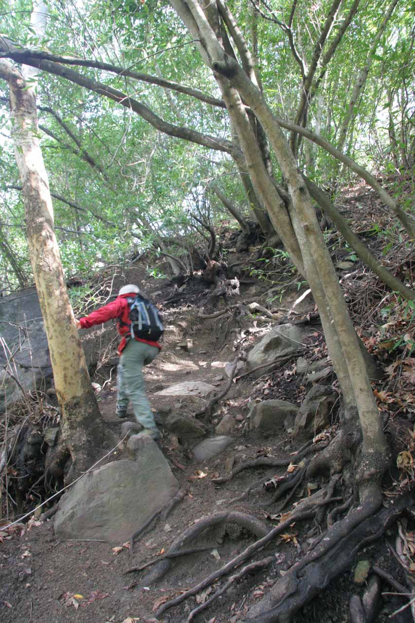 A particularly steep part of the trail