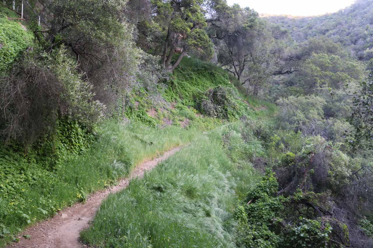 The West Fork Cold Springs Trail was considerably narrower and more uphill than it was earlier on