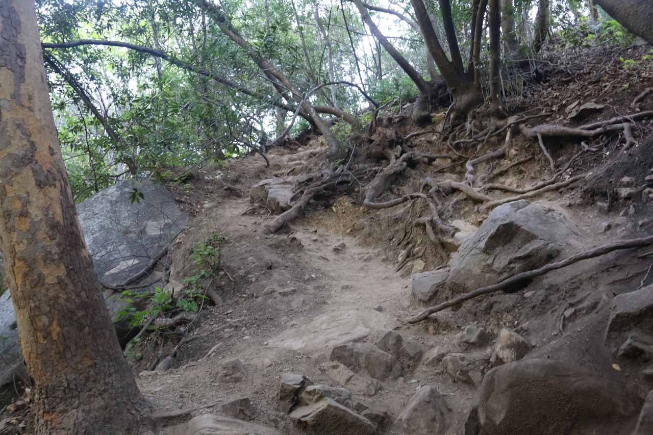 A steep section of the Tangerine Falls Trail where I had to climb hand-over-feet on some rocks and exposed tree roots