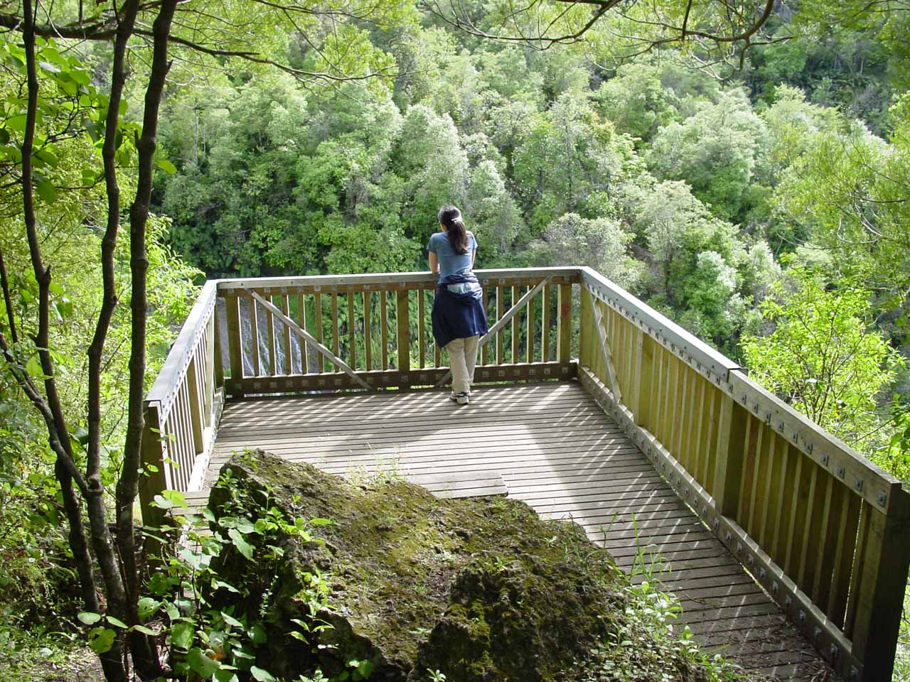 Julie checking out Tangoio Falls from the lookout point