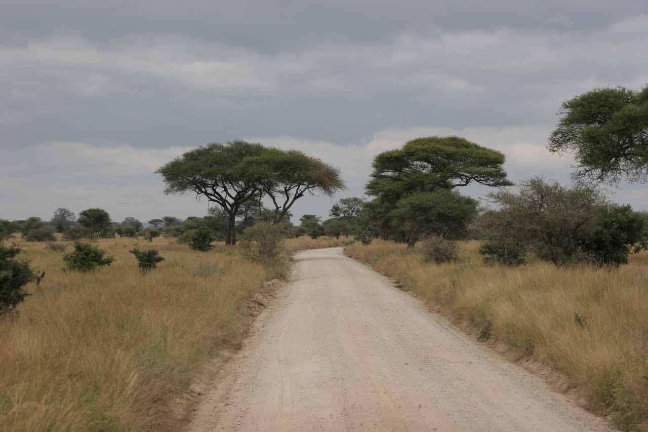 Road through boabab-studded Tarangire National Park