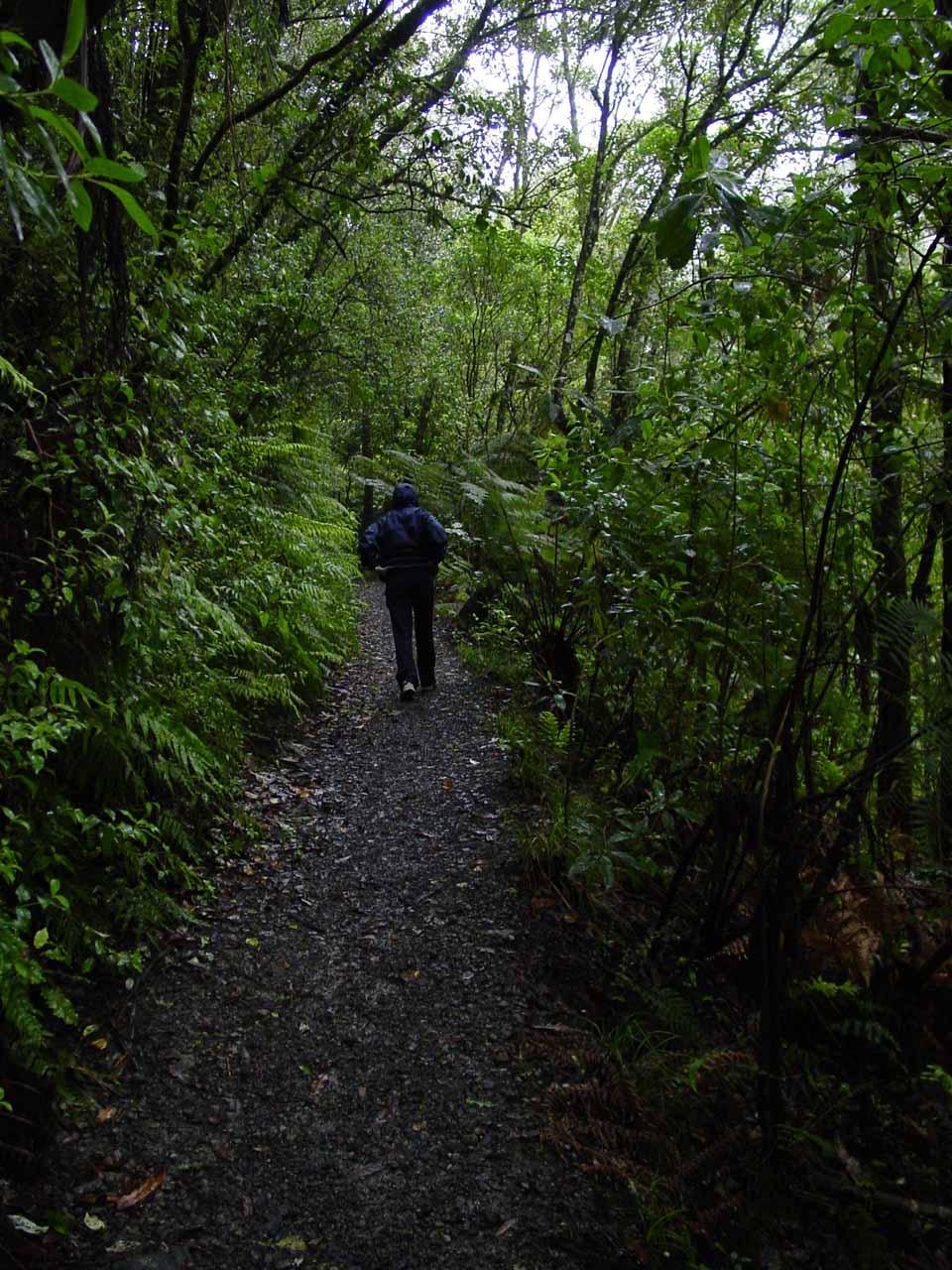 Julie on the lush bush walk to Tarawera Falls