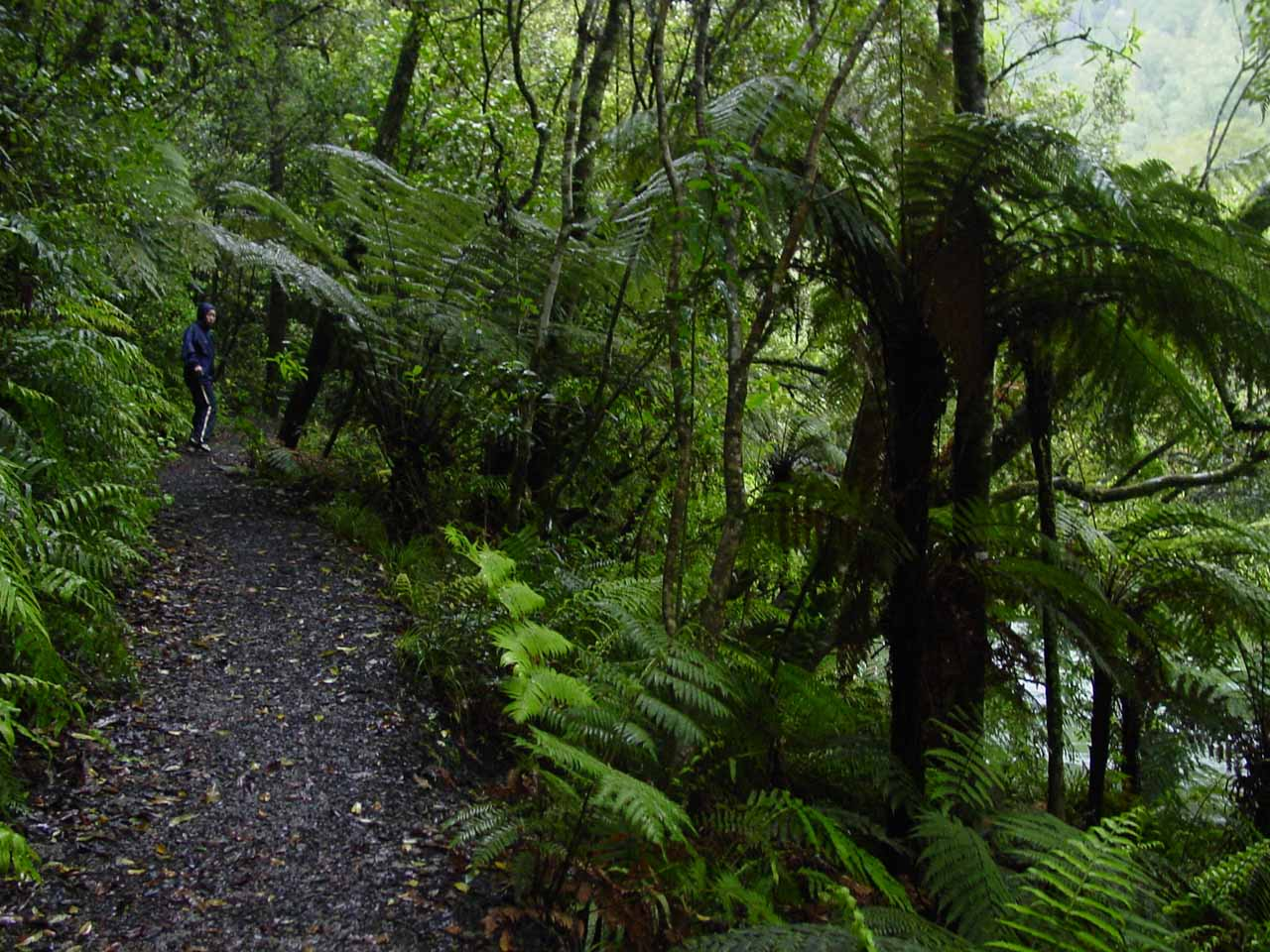 Julie further along on the bush track flanked by native bush on the Tarawera Falls Track