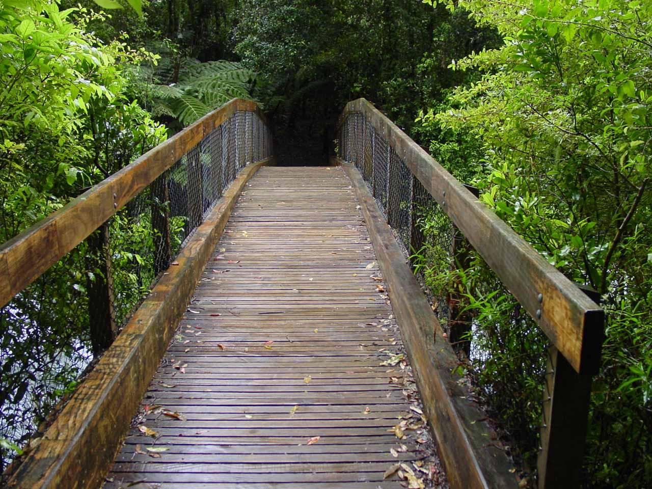 Looking over a bridge we had to take in search of Tarawera Falls
