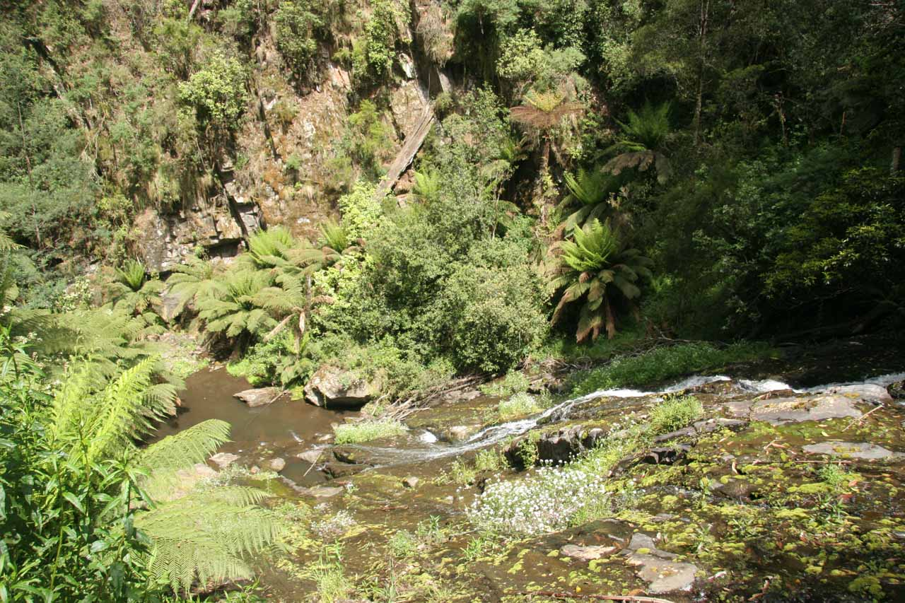 Looking towards the bottom of Tarra Falls, which was quite close to Cyathea Falls