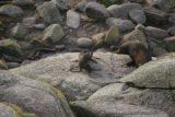 Tauranga_Bay_025_12292009 - Checking out some New Zealand fur seals at Tauranga Bay