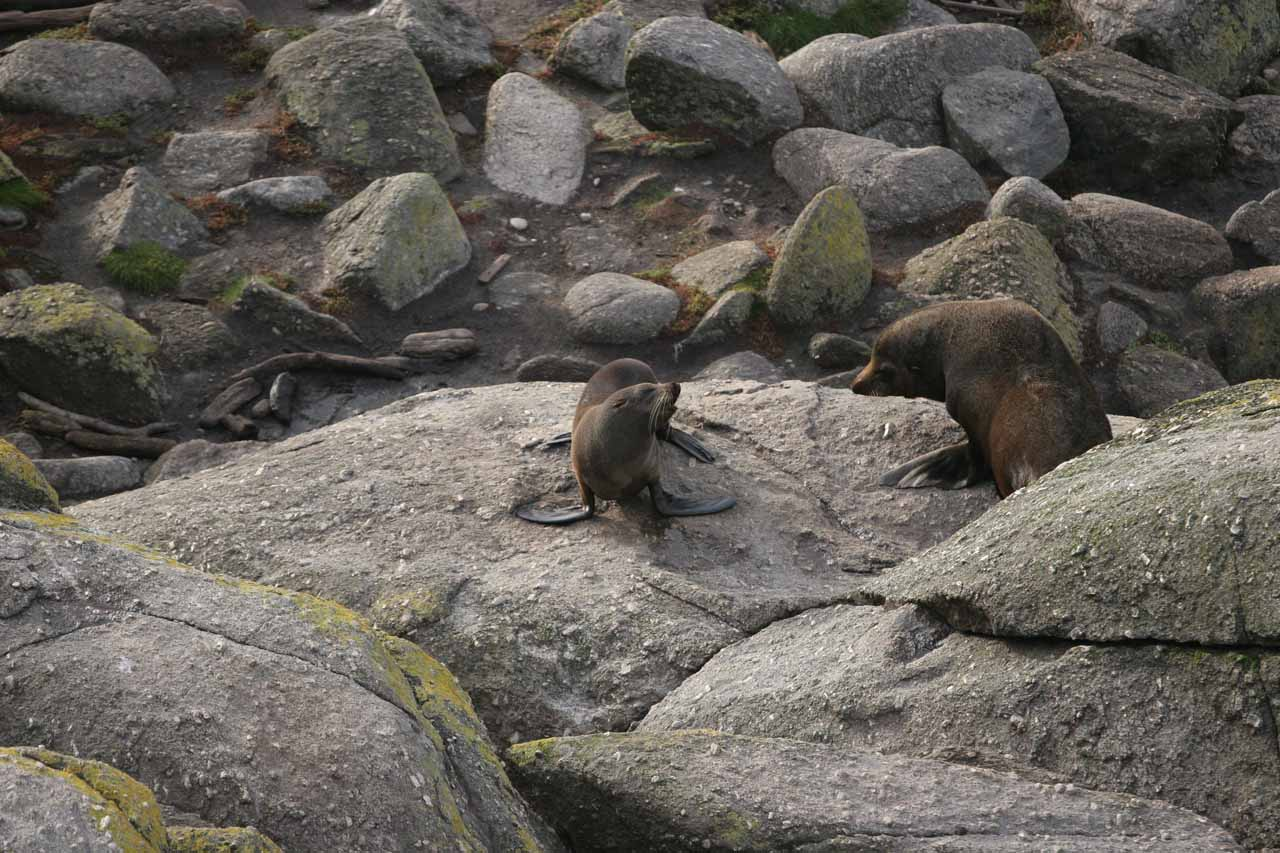 When we returned to Westport at the end of the day, we checked out the windswept coast of Tauranga Bay seeing both landscapes and wildlife, especially New Zealand fur seals