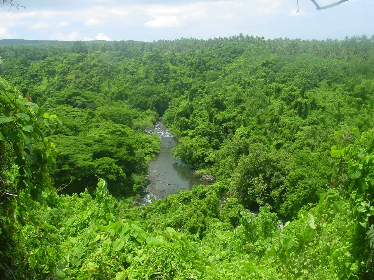 View of the river from within the lush plantation we toured as we made our way to Waibula Falls