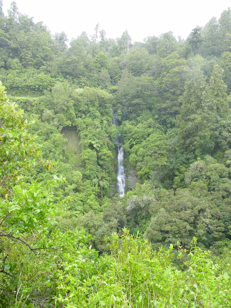 Looking back in the direction of the lookout from the bridge above Mokau Falls, we got this look at the obscure Tauwhare Falls