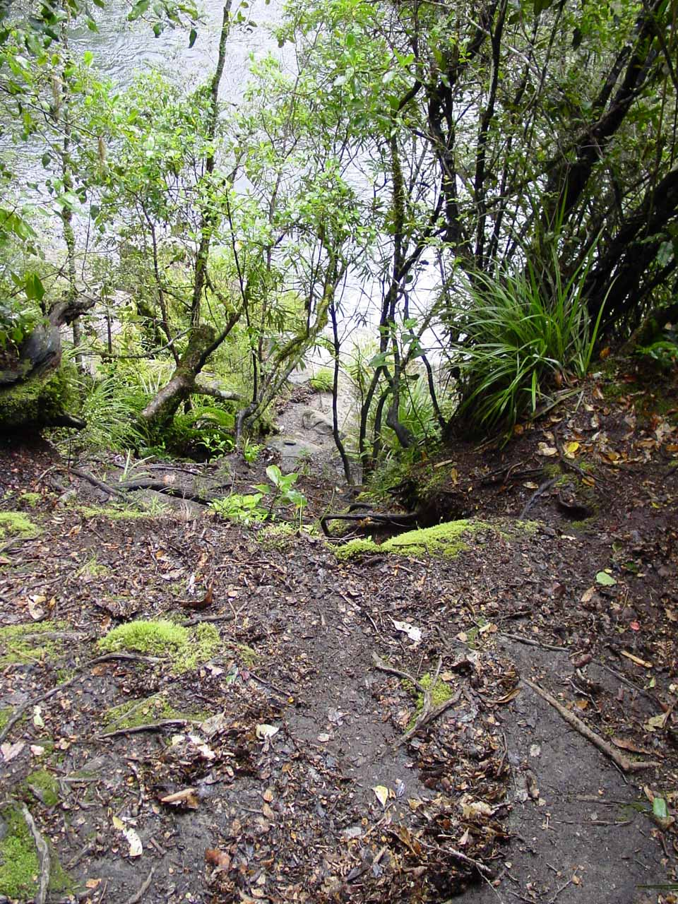 This was where I stopped on the very steep and eroded path to a view of the Aniwaniwa Falls