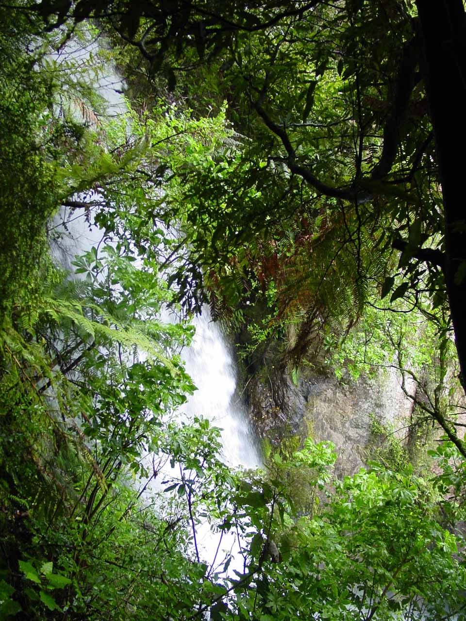 Partial view of Te Wairoa Falls as we took the bush walk detour towards the end of our excursion