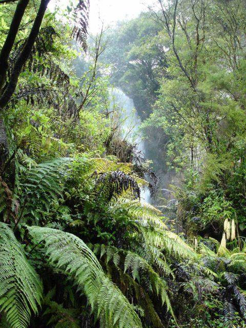 Te_Wairoa_004_jx_11132004