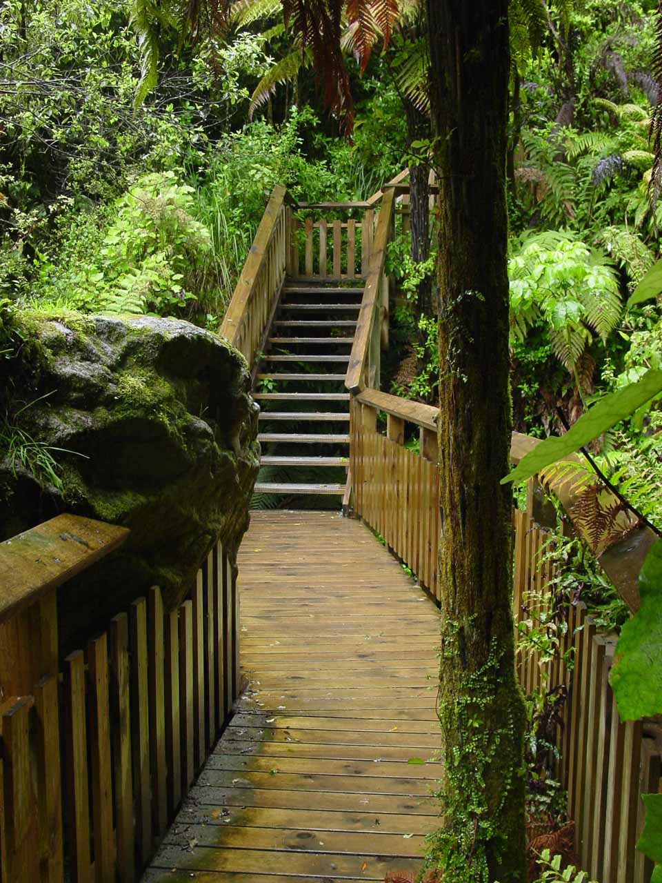 Looking back at the wooden boardwalk that took us close to Te Wairoa Falls