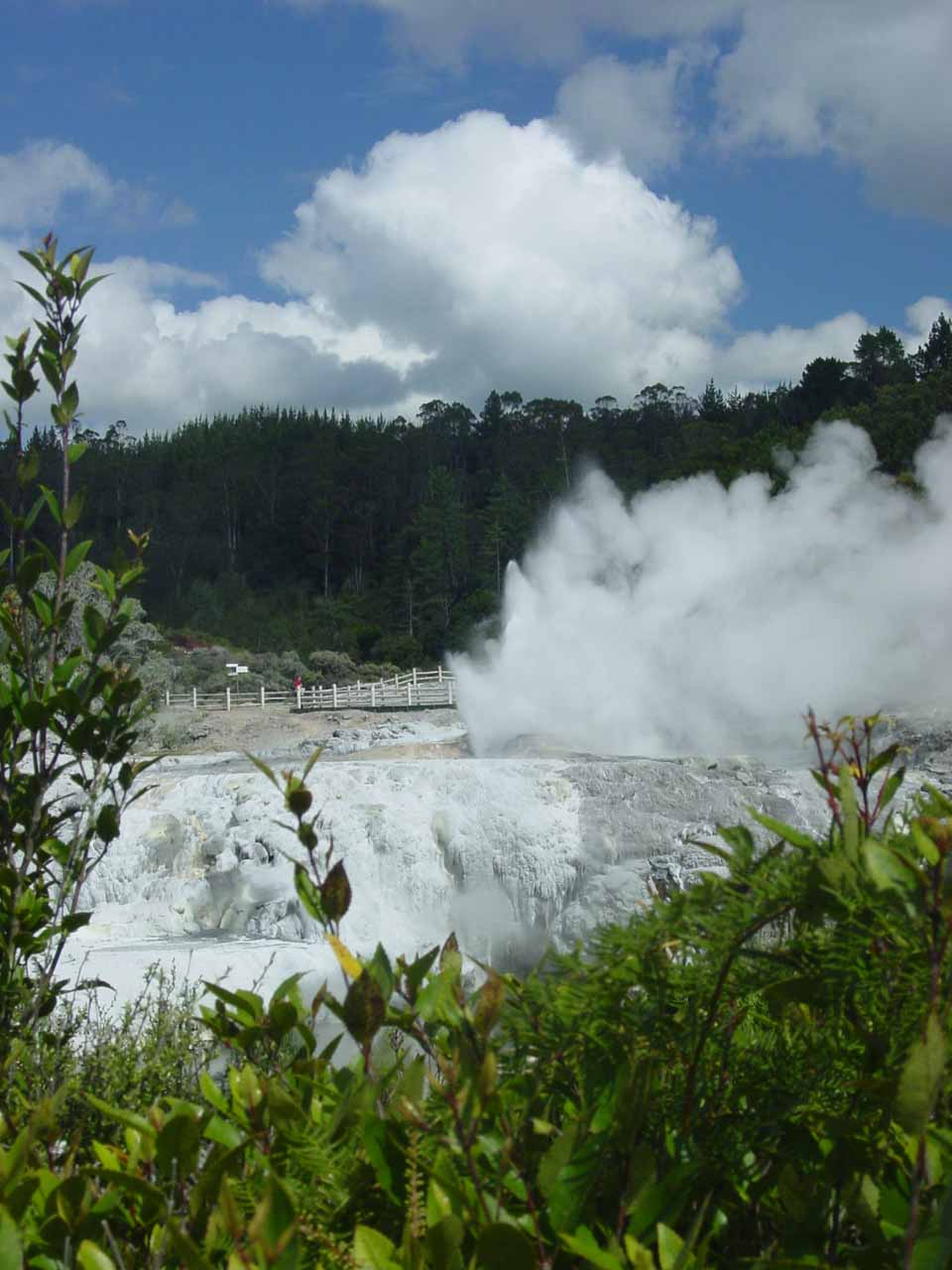 Looking in the direction of where Prince of Wales and Pohutu Geyser are supposed to be