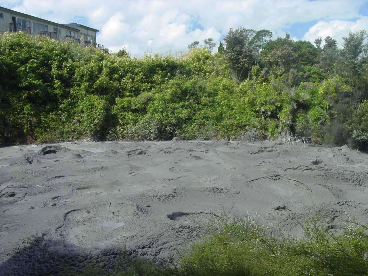 Looking across some mud pots at Te Whakarewarewa
