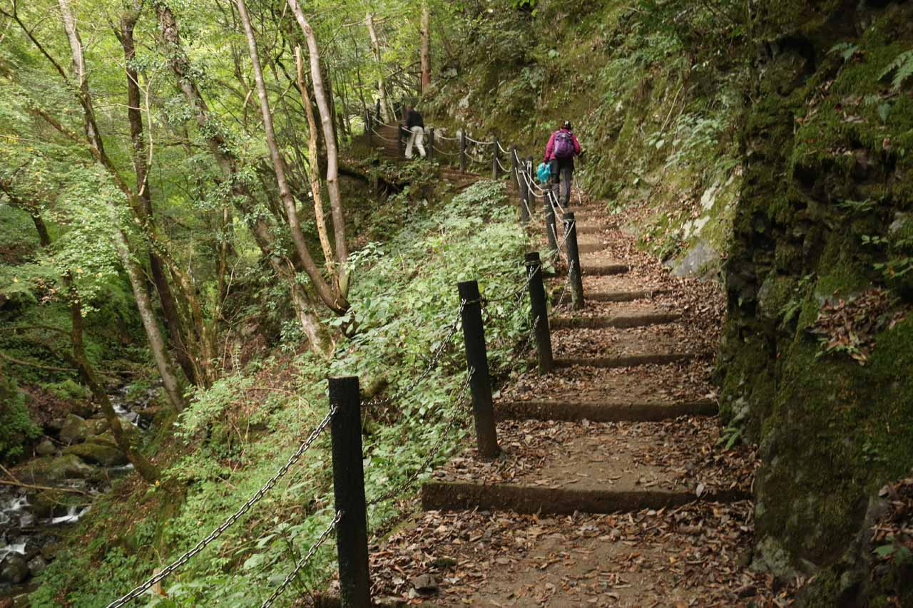 Dad and Mom continuing to ascend along the Tendaki Trail