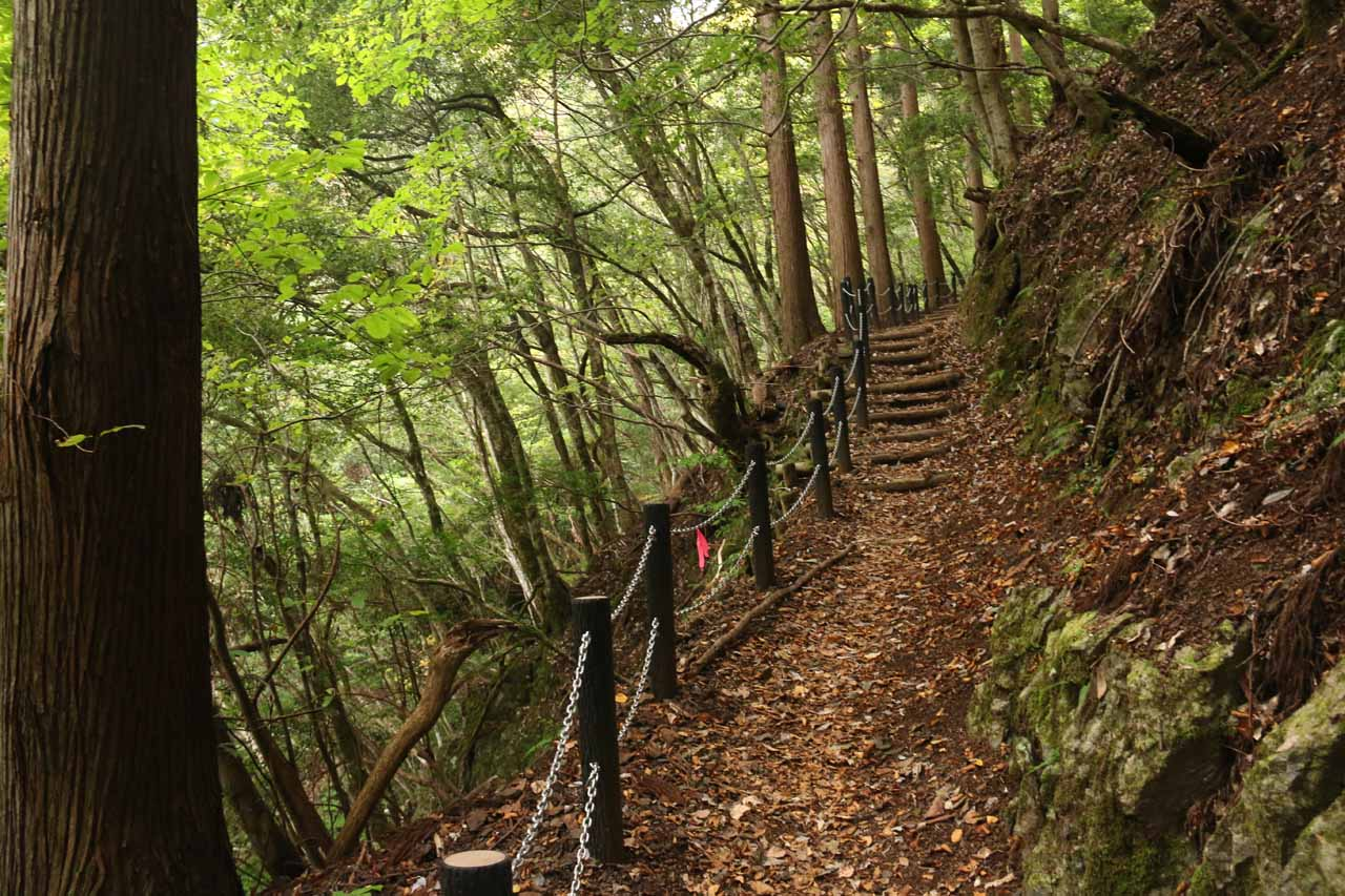 Trailside scenery en route to Tendaki