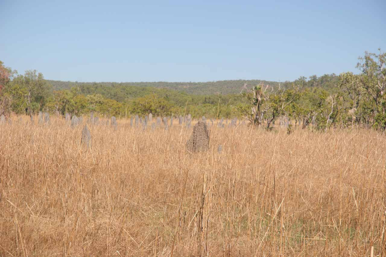 Broad view of the termite mounds spread out over the grasslands
