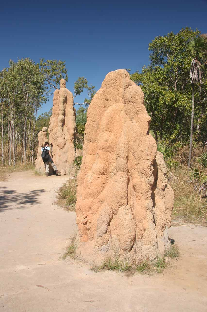 Giant Termite Mounds
