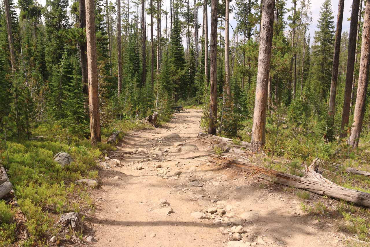 The Terraced Falls Trail promptly descended into the forest from the trailhead